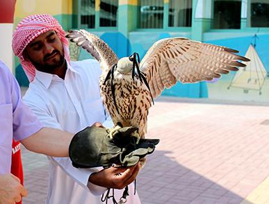Besuch vom Falken